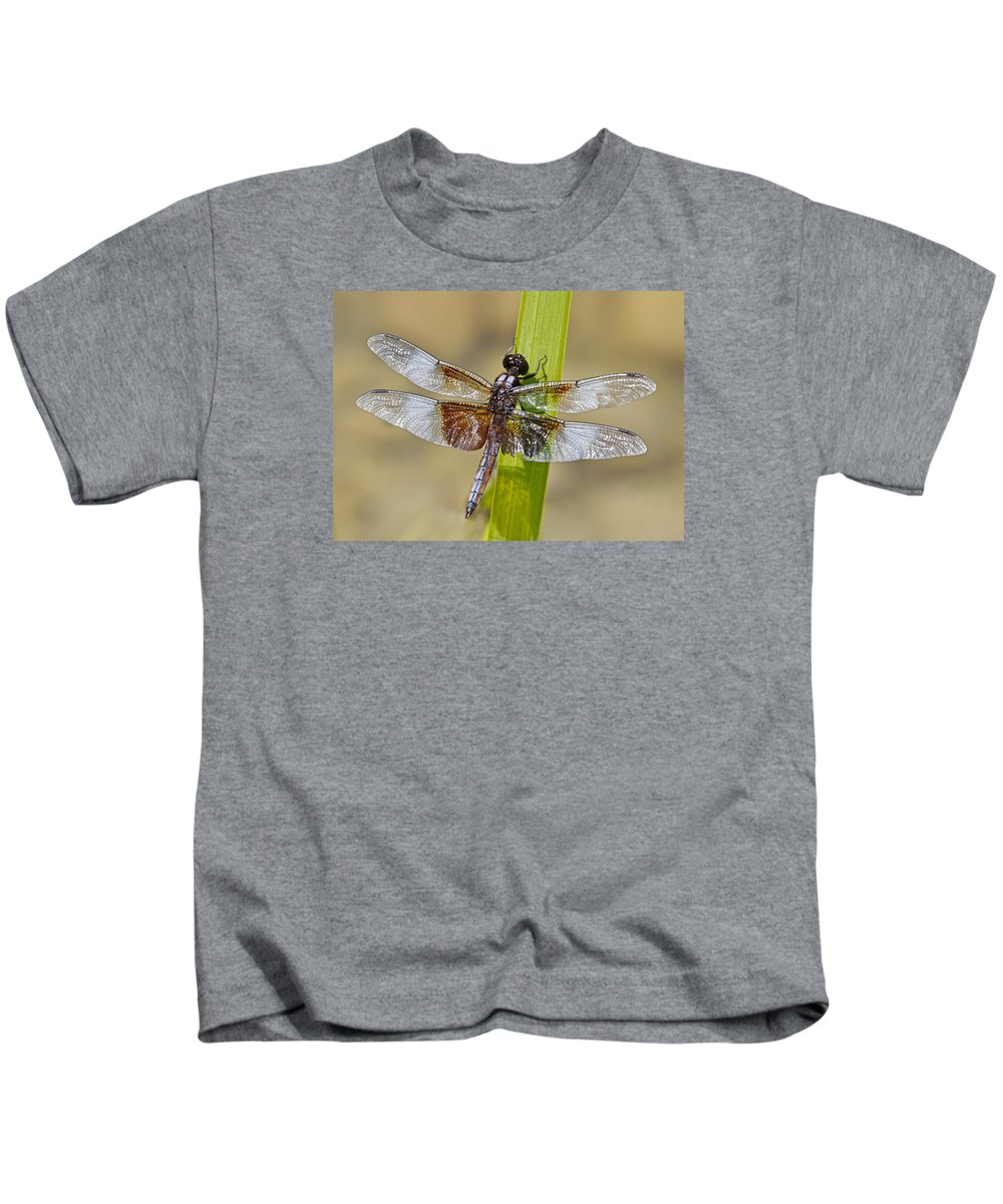 Beautiful Macro Detailed Image Of Dragonfly Closeup Wings Insect Kids T-Shirt featuring the photograph Dragonfly by Sherry Butts