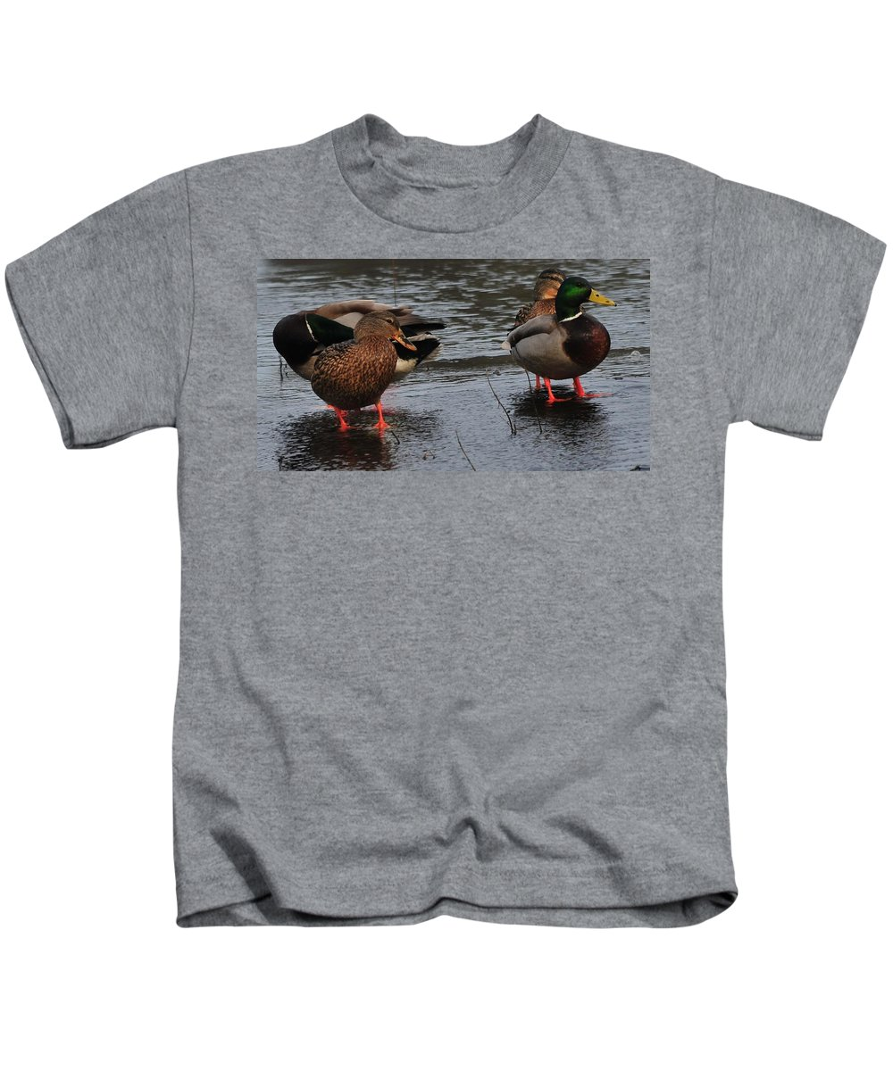 Ducks Hoping For Snacks Frozen Cranberry Bog Duxbury Ma Kids T-Shirt featuring the photograph Ducks Hoping For Snacks by Bill Driscoll