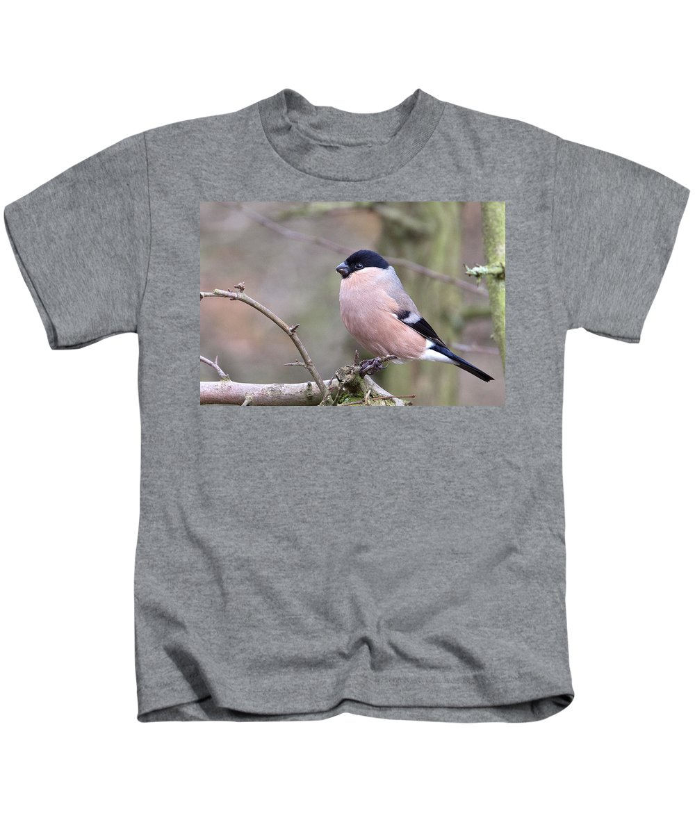 Bullfinch Kids T-Shirt featuring the photograph Female Bullfinch by Bob Kemp