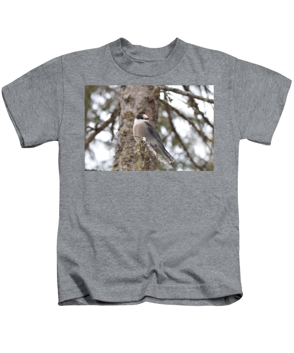 Nature Kids T-Shirt featuring the photograph Get My Good Side-grey Jay by David Porteus