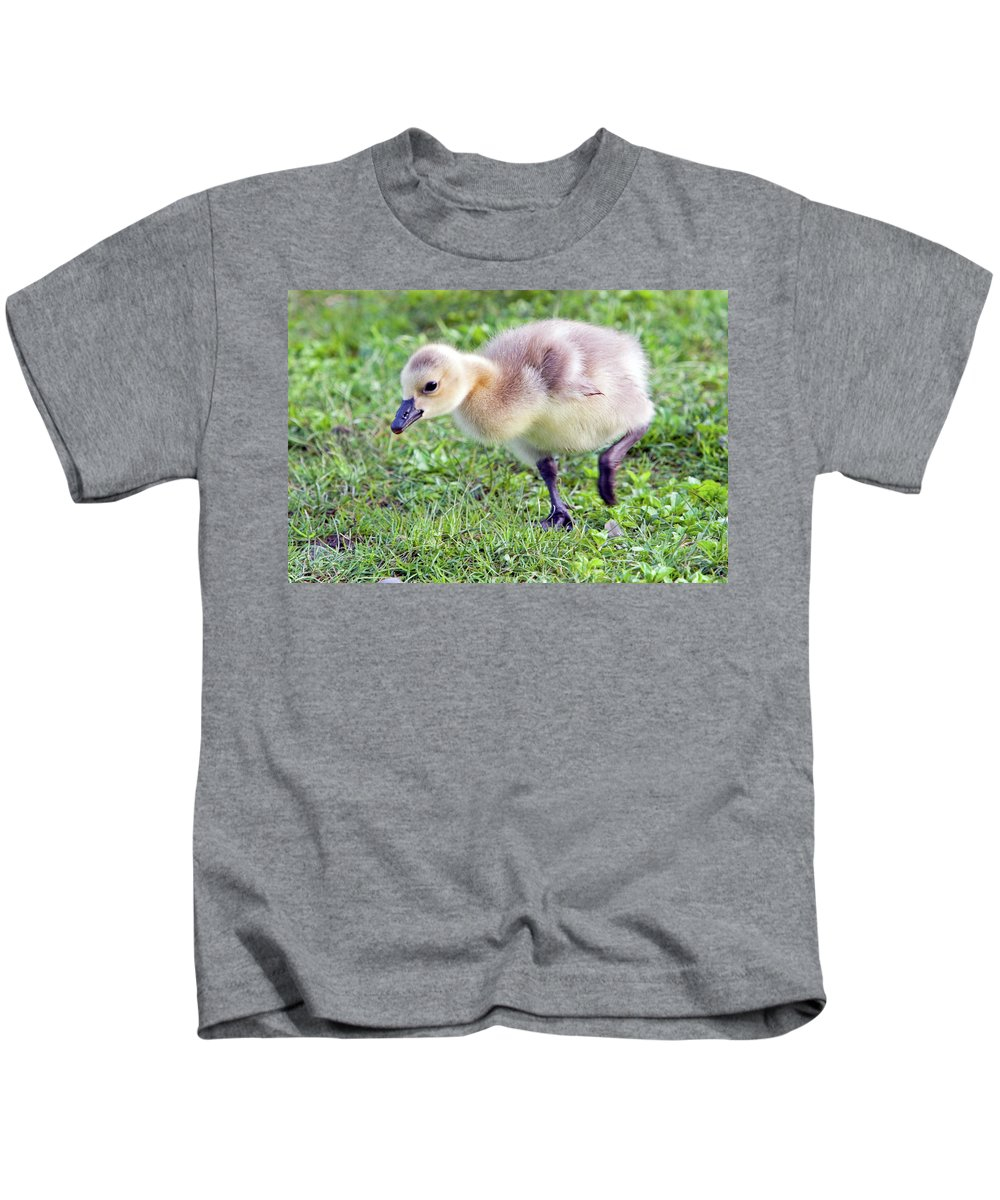 Canada Goose Kids T-Shirt featuring the photograph Gosling by Randall Ingalls