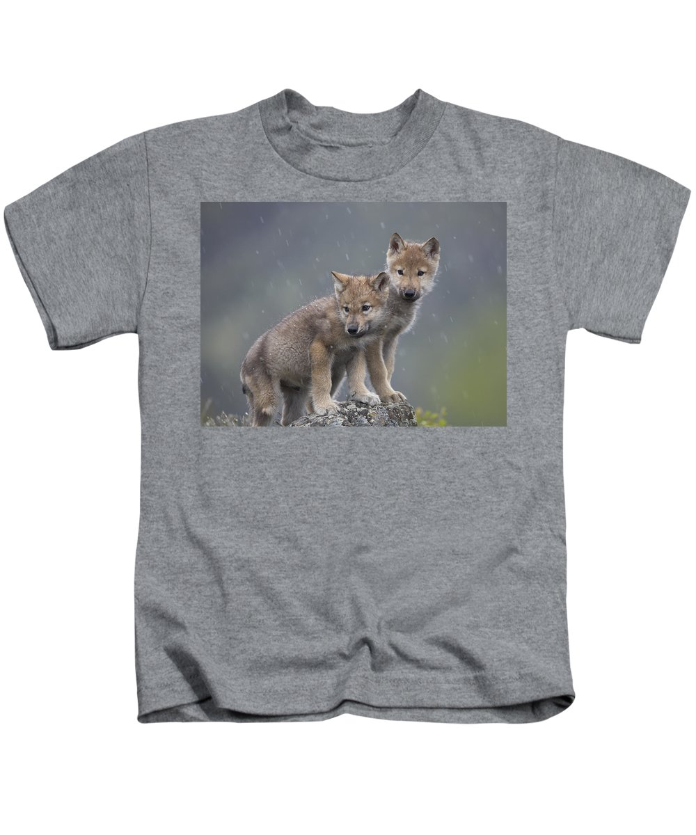 Mp Kids T-Shirt featuring the photograph Gray Wolf Canis Lupus Pups In Light by Tim Fitzharris