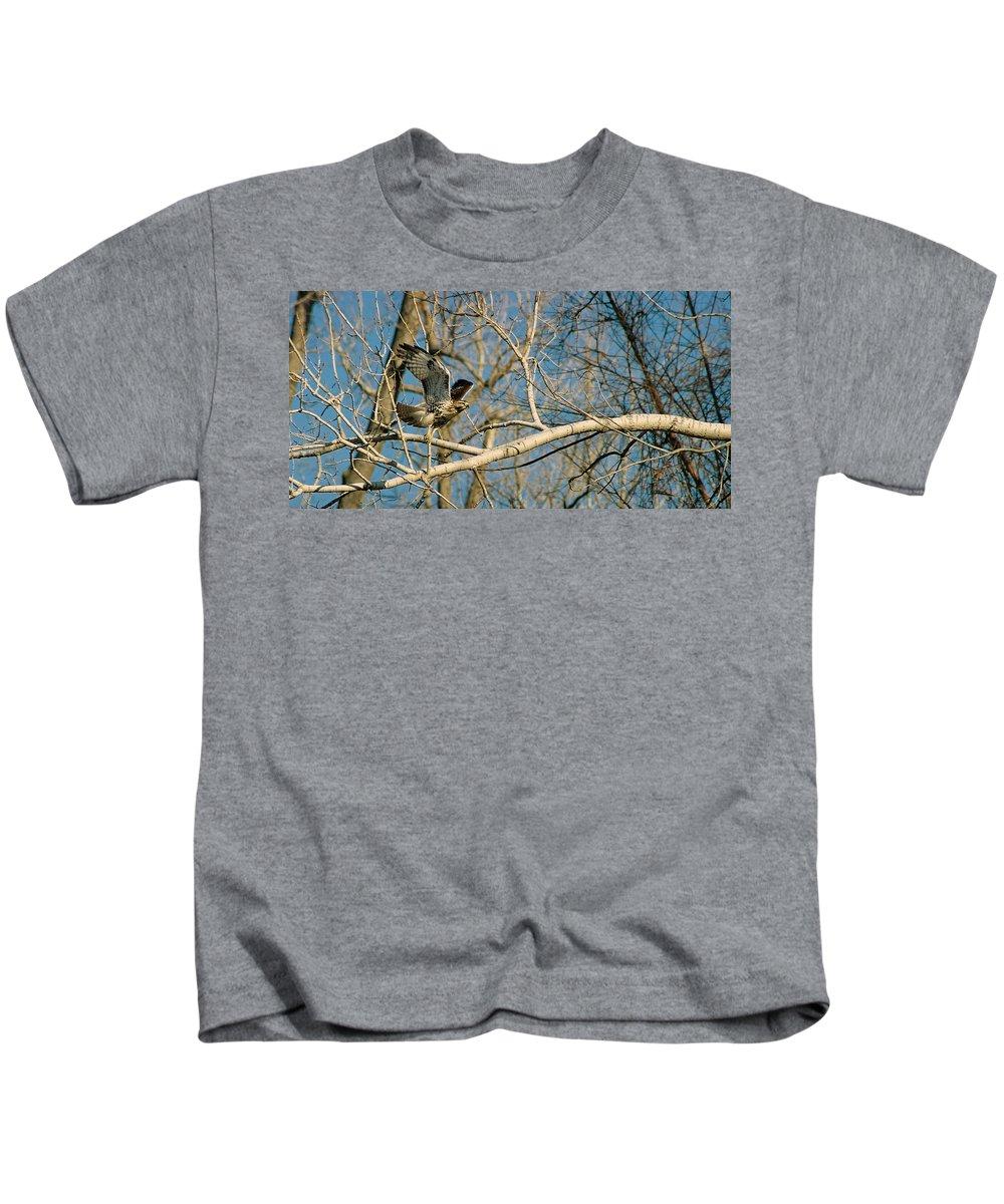 Hawk Kids T-Shirt featuring the photograph Hawk by Steve Karol
