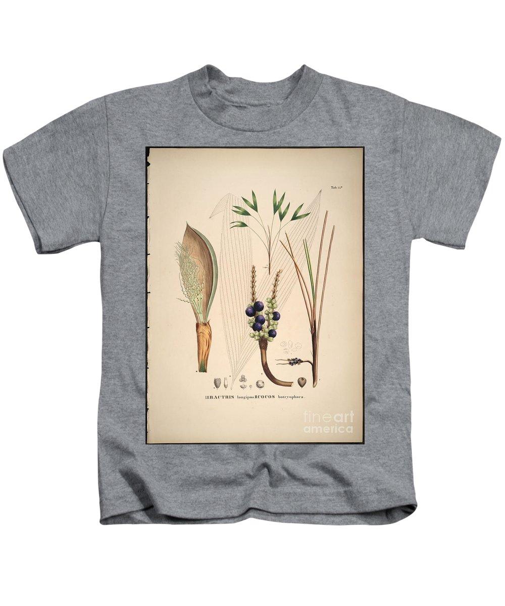 Historia Naturalis Palmarum Kids T-Shirt featuring the painting Historia Naturalis Palmarum by MotionAge Designs