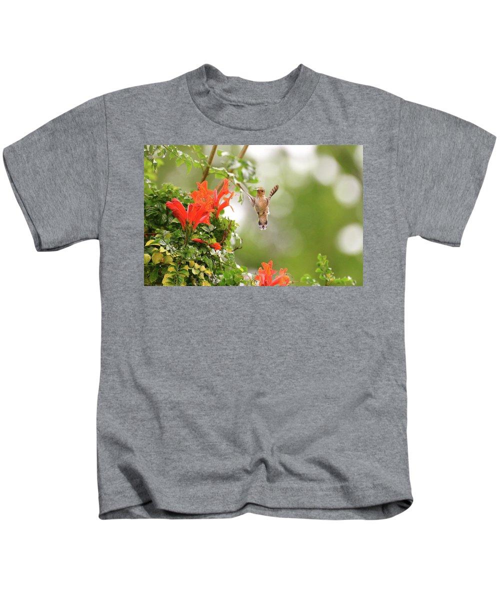 Hummingbirds Bird Kids T-Shirt featuring the photograph Honeysuckle Hummer by Lynn Bauer