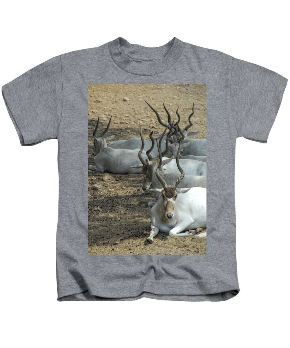 Addax Kids T-Shirt featuring the photograph Horney by Donna Blackhall