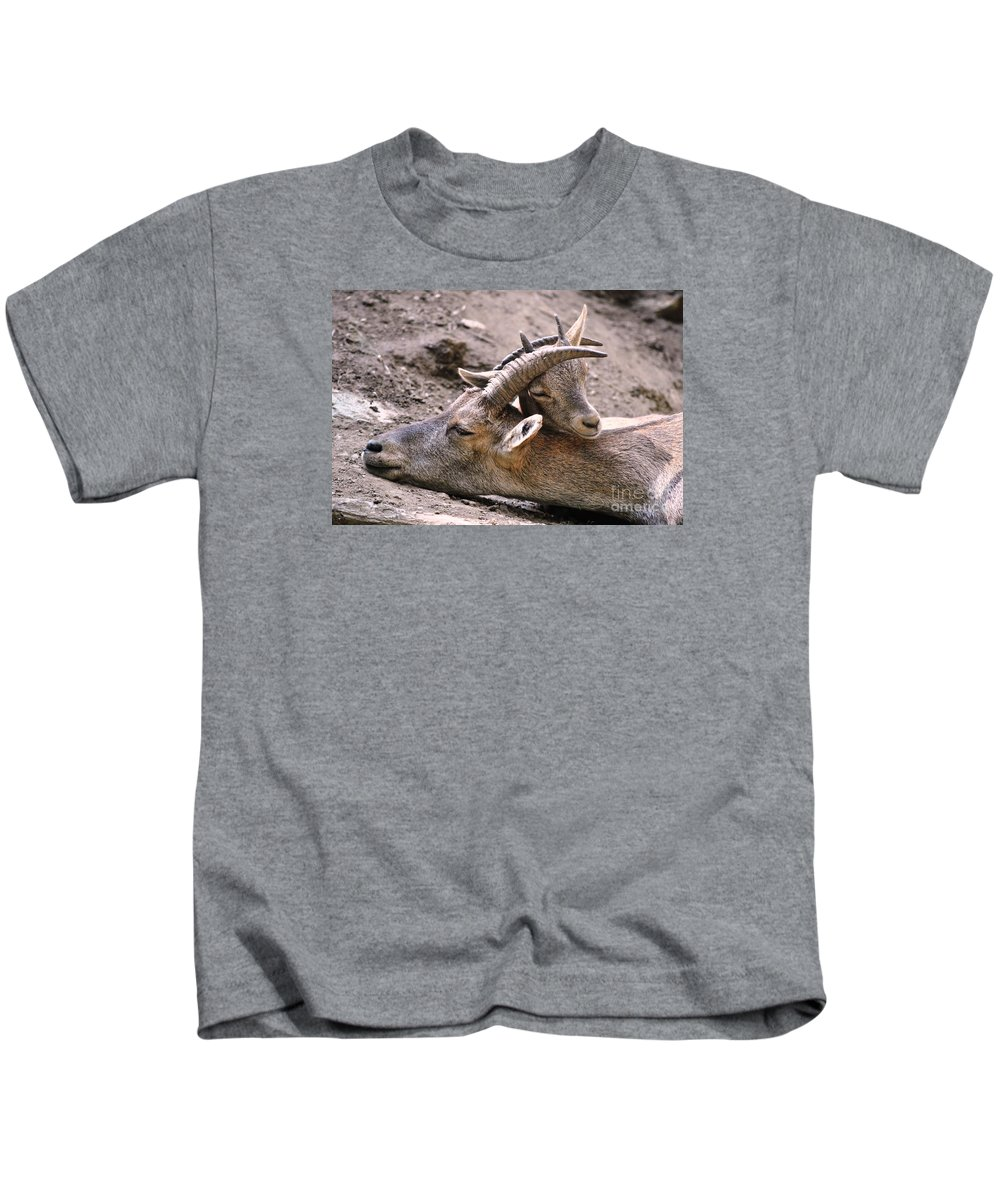 Ibex Kids T-Shirt featuring the photograph Ibex Mother And Son by Valerio Poccobelli