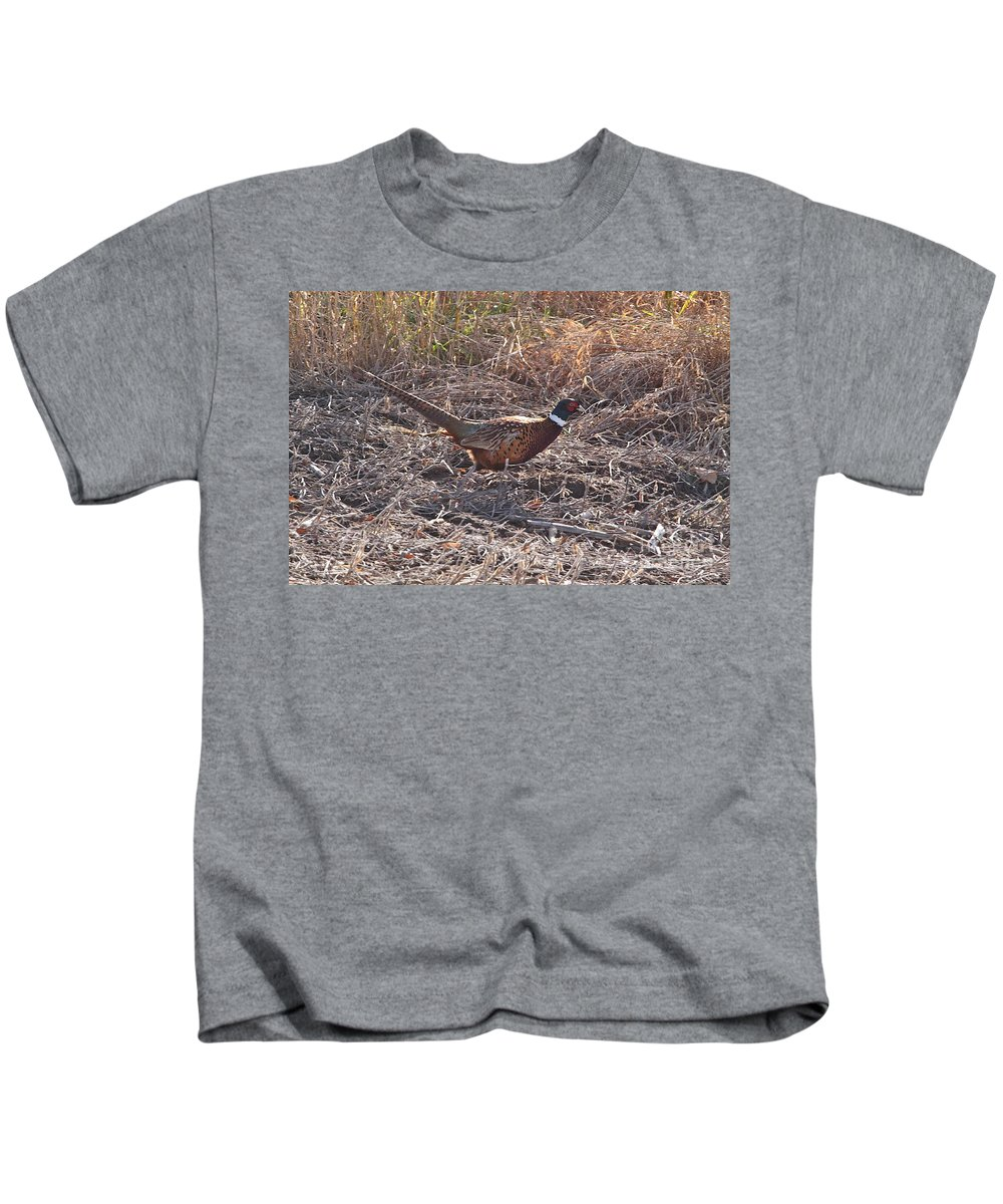 Wild Birds Ring Neck Phesant Wild Nature In Michigan Kids T-Shirt featuring the photograph Its A Ring Neck by Robert Pearson