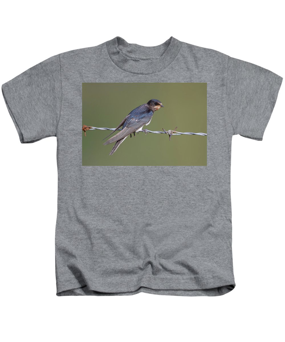 Barn Kids T-Shirt featuring the photograph Juvenile Barn Swallow Side On by Peter Walkden