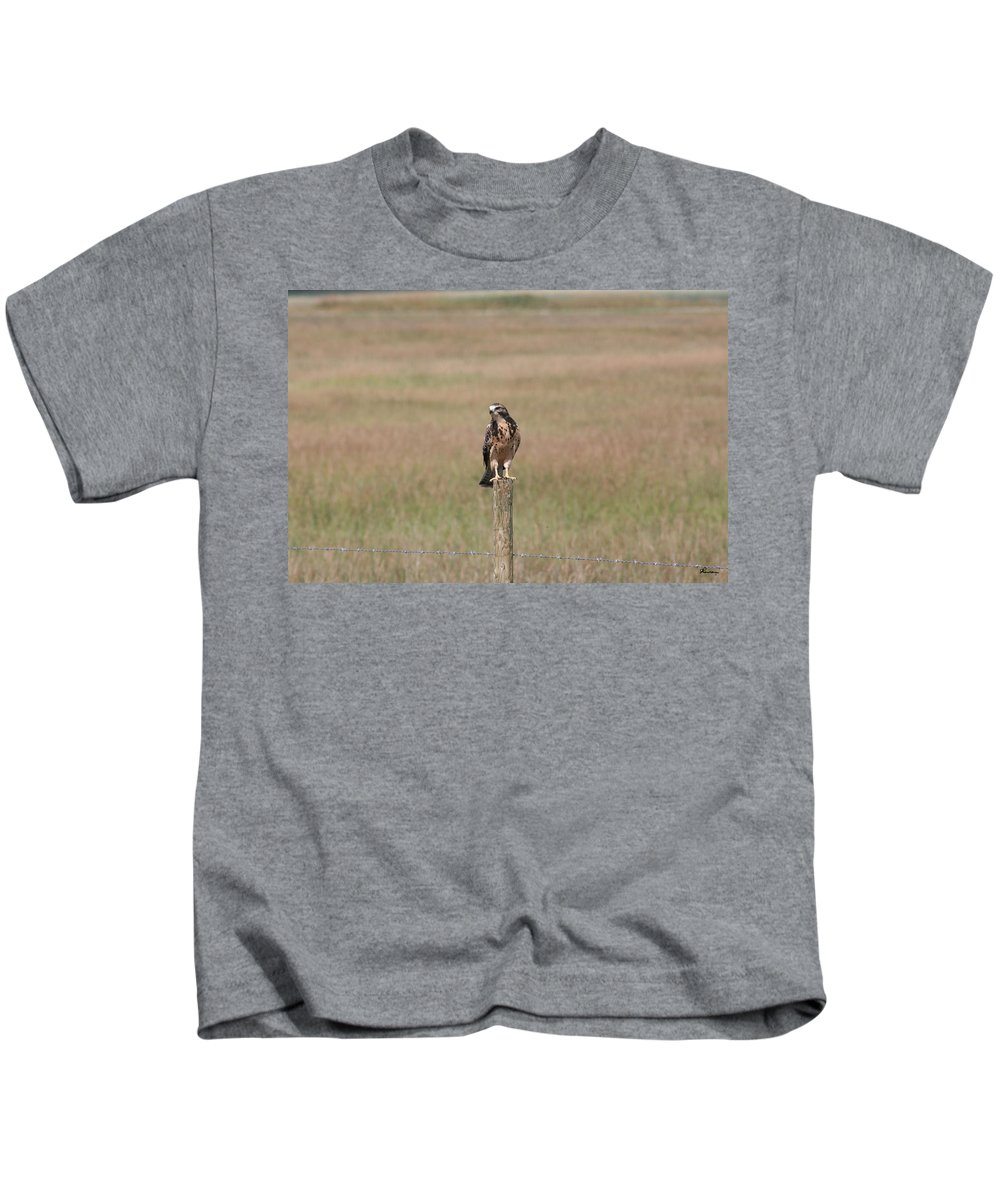 Hawk Wild Bird Nature Grass Fence Barbwire Flying Kids T-Shirt featuring the photograph King Of His Domain. by Andrea Lawrence