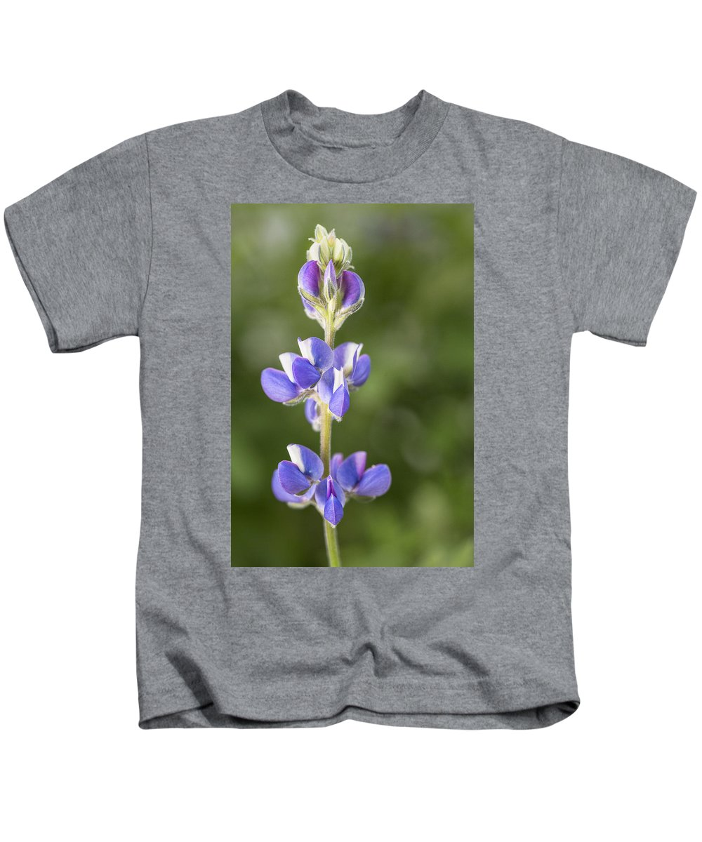 Lupine Kids T-Shirt featuring the photograph Little Lupine by Denise Bush
