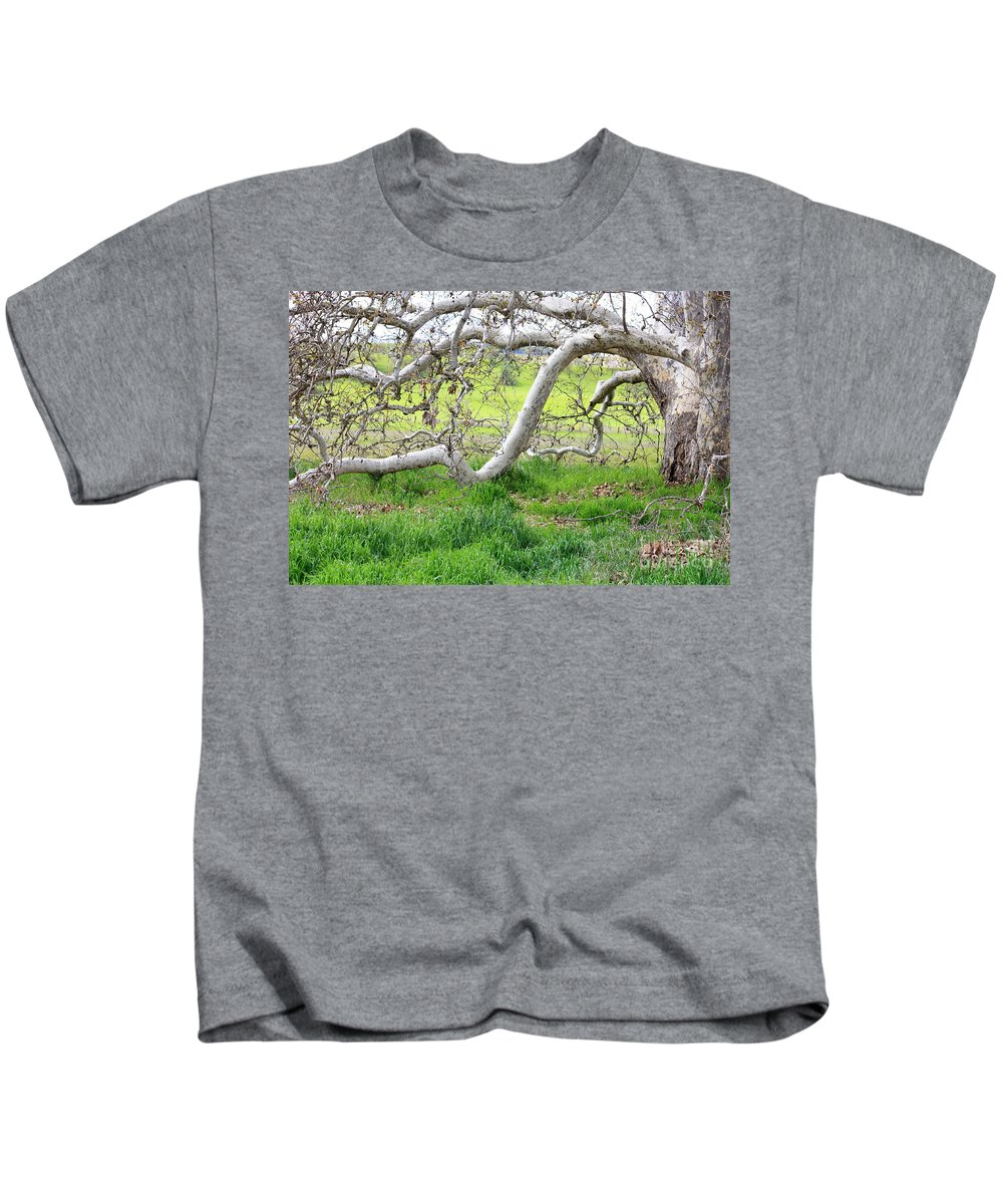 Landscape Kids T-Shirt featuring the photograph Low Branches On Sycamore Tree by Carol Groenen