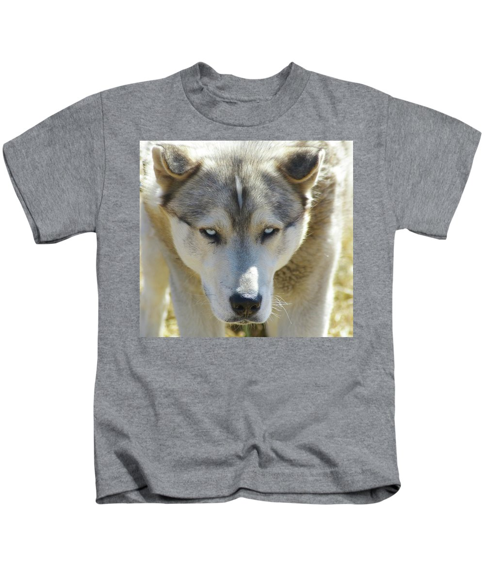 Dogs. Far Animals. Huskies Kids T-Shirt featuring the photograph Meet Mr Happy by Jeff Swan
