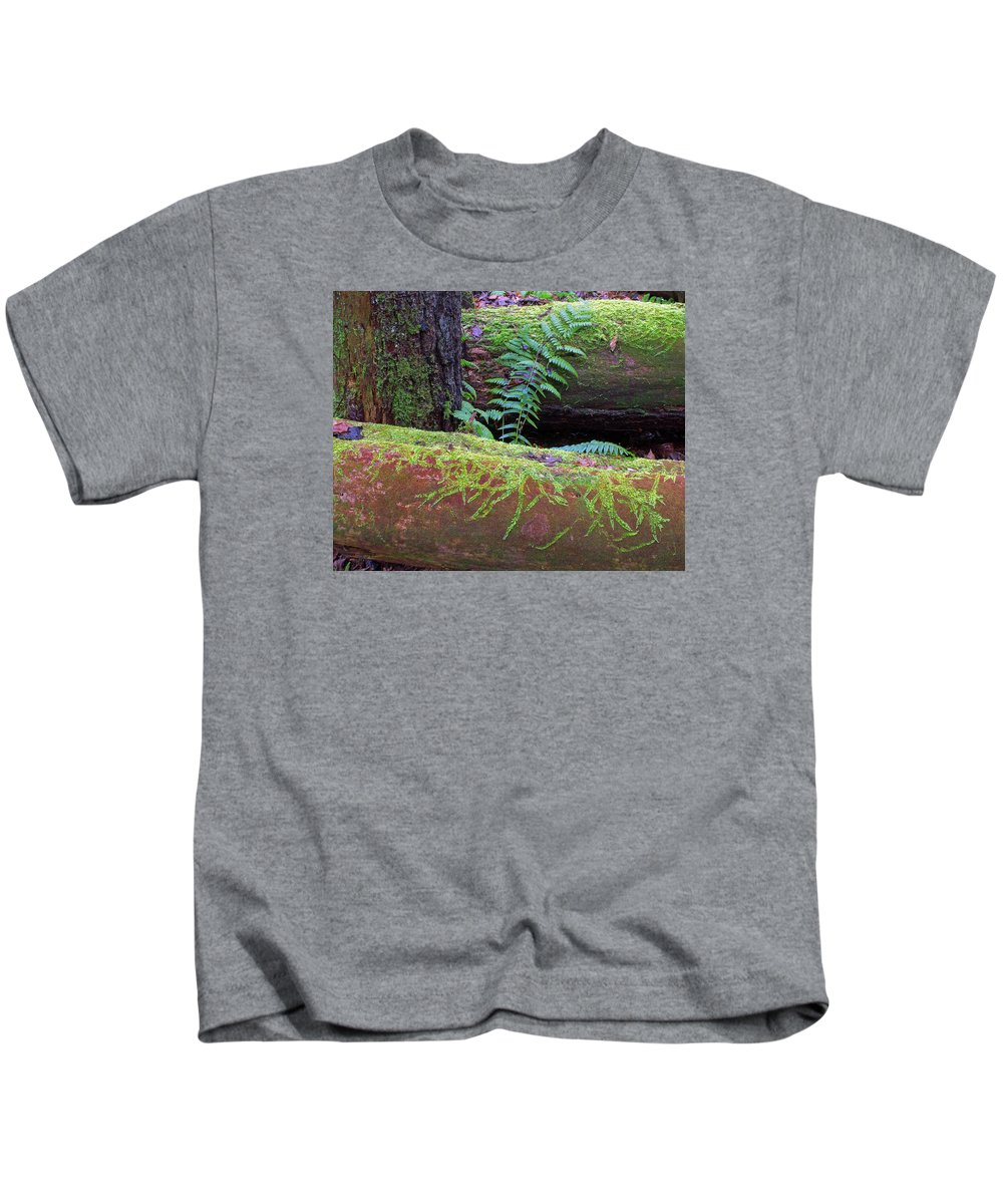 Ferns Kids T-Shirt featuring the photograph Forest Light by Ted M Tubbs