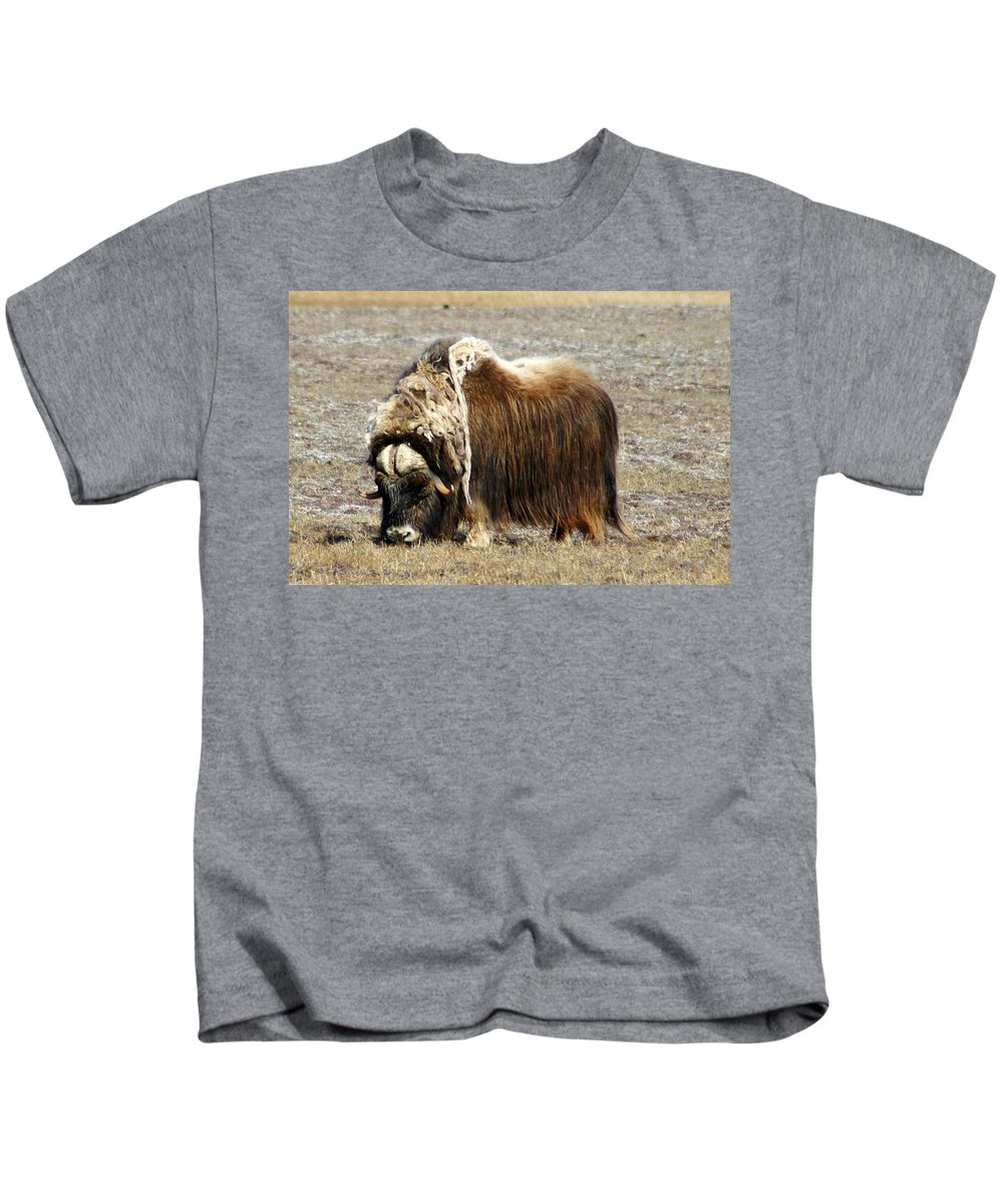 Musk Ox Kids T-Shirt featuring the photograph Musk Ox by Anthony Jones