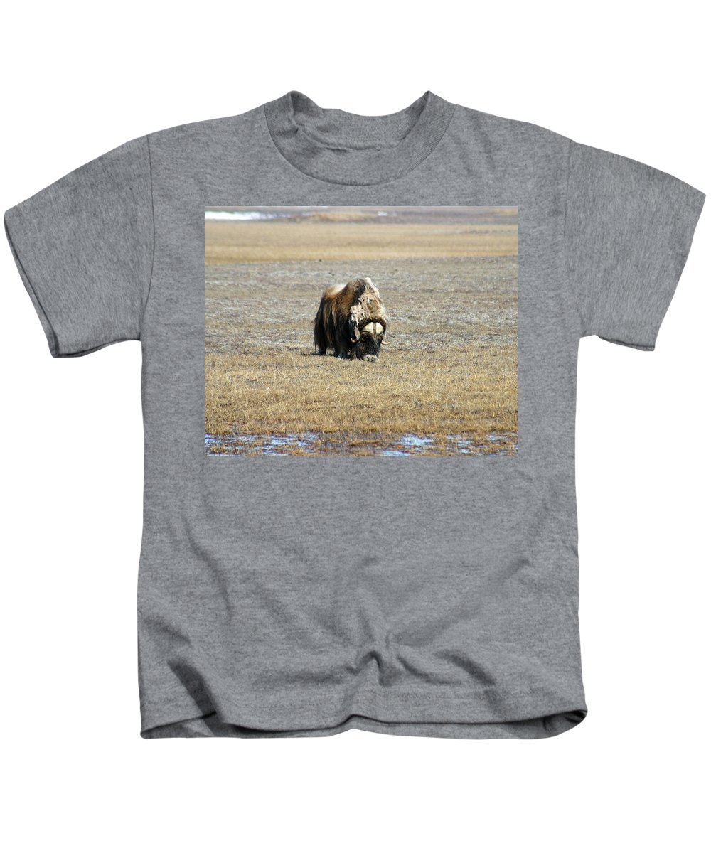 Musk Ox Kids T-Shirt featuring the photograph Musk Ox Grazing by Anthony Jones