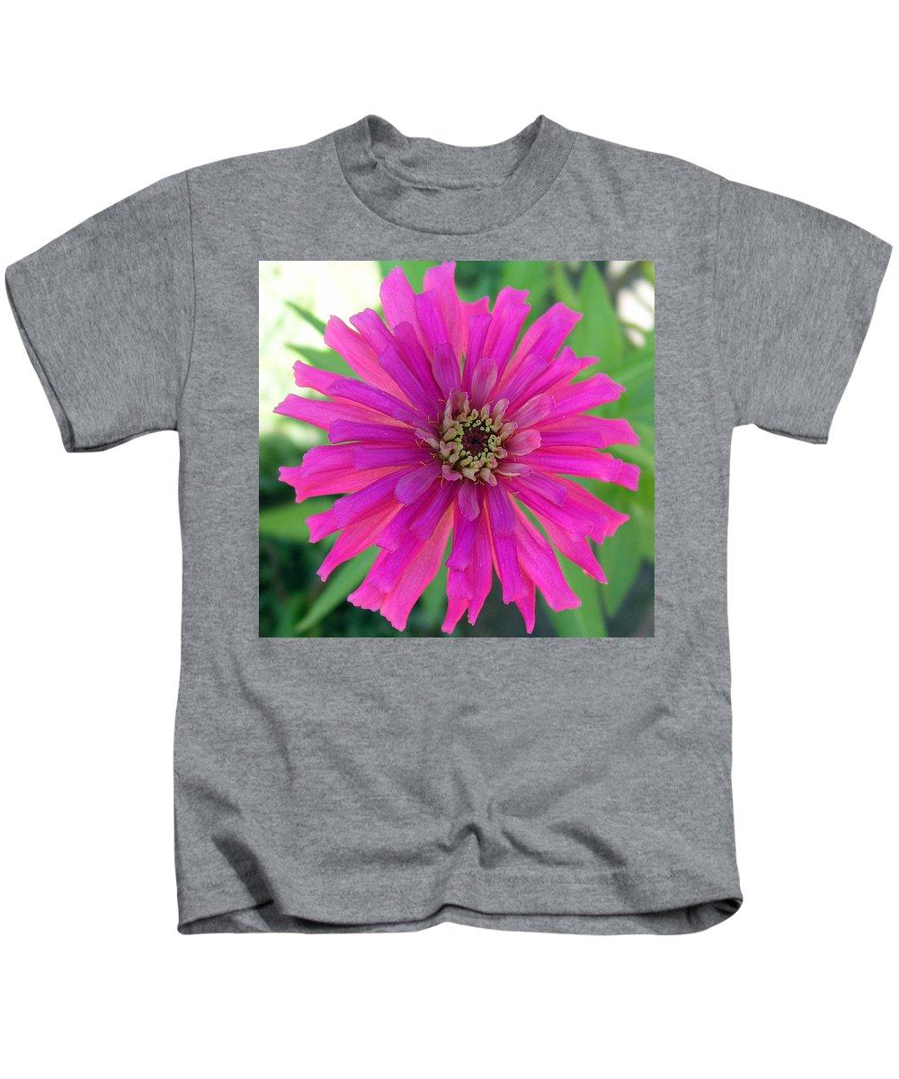 Zinnia; Flower; Pink; Translucent; Transparent; Florida; Petals; Garden; Zinnia; Agustifolia; Flower Kids T-Shirt featuring the photograph Pink Zinnia In Florida by Allan Hughes
