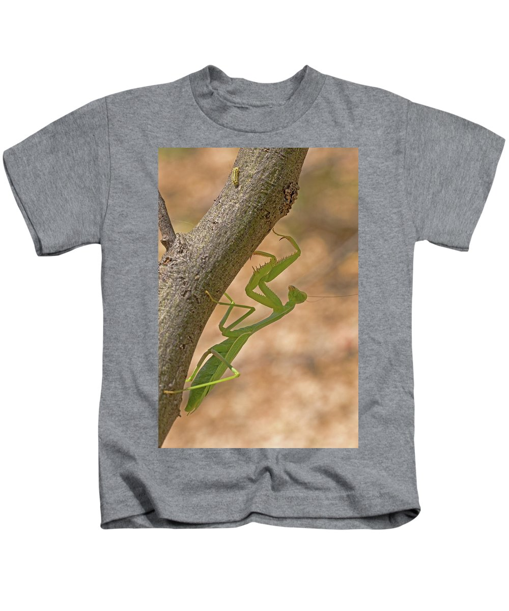 Hunting Kids T-Shirt featuring the photograph Praying Mantis On The Hunt by Randall Ingalls