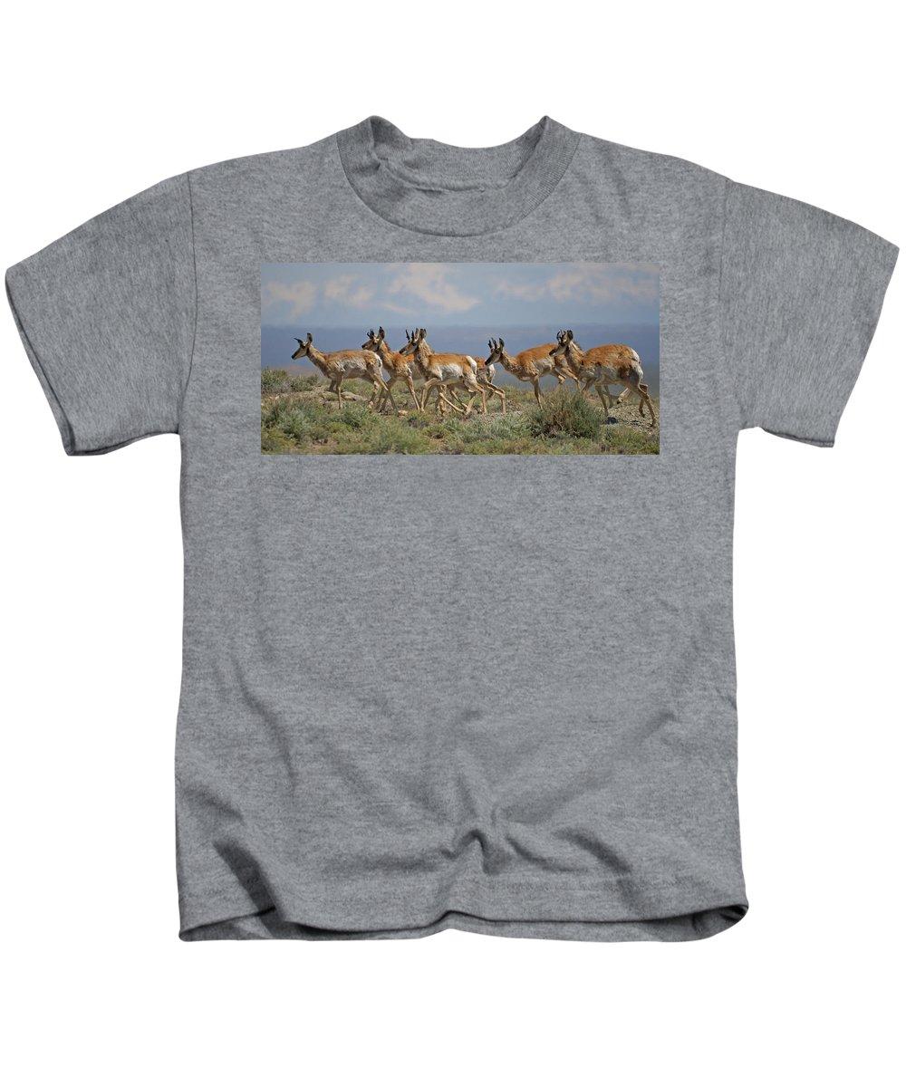 Pronghorn Kids T-Shirt featuring the photograph Pronghorn Antelope Running by Heather Coen