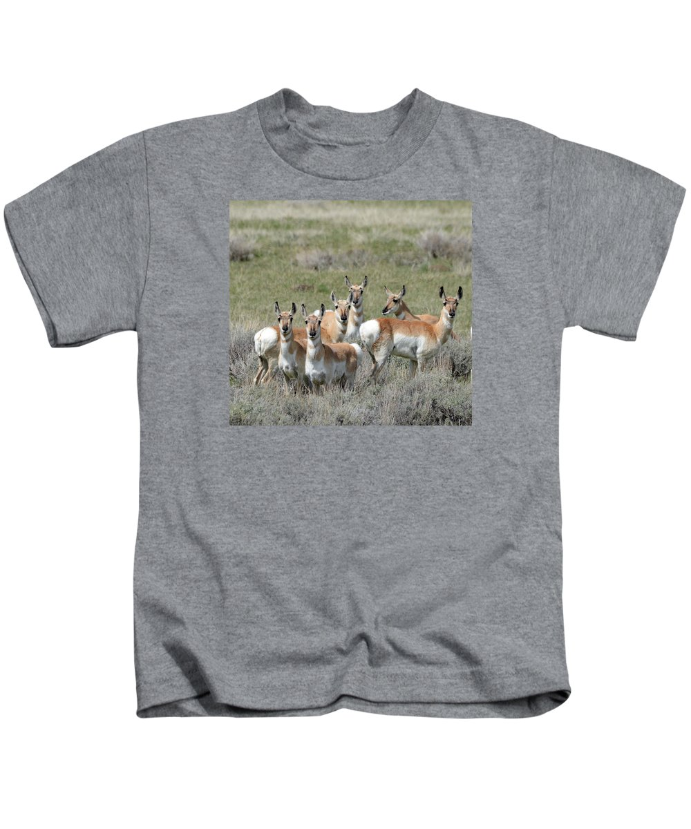 Pronghorn Kids T-Shirt featuring the photograph Pronghorn Harem by Whispering Peaks Photography