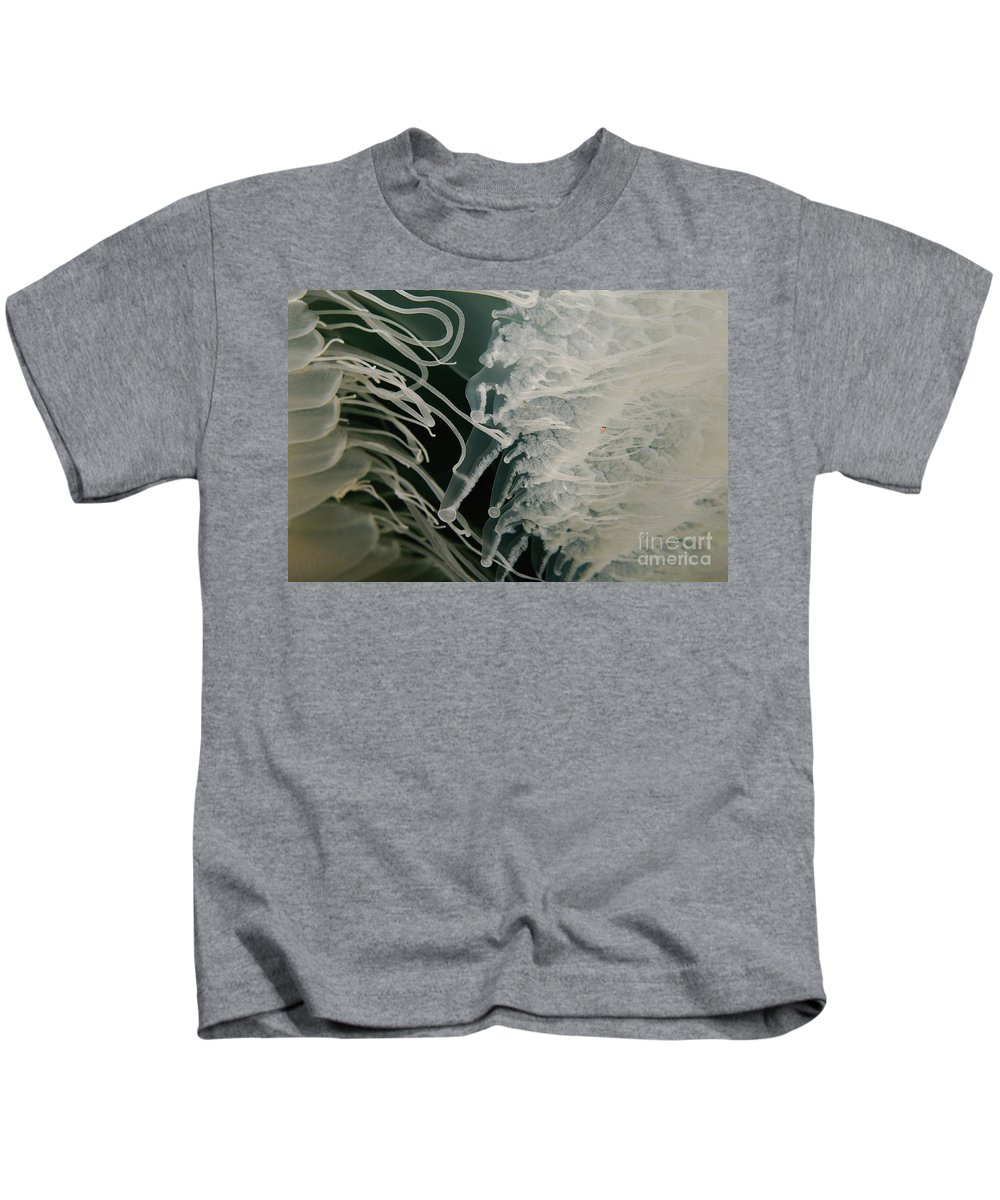 Underwater Kids T-Shirt featuring the photograph Rhopilema Nomadica Jellyfish by Hagai Nativ