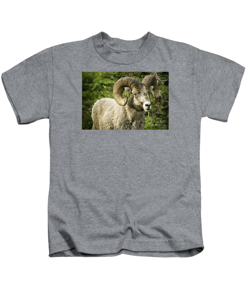 Glacier Park Kids T-Shirt featuring the photograph Rocky Mountain Bighorn Sheep by Timothy Hacker