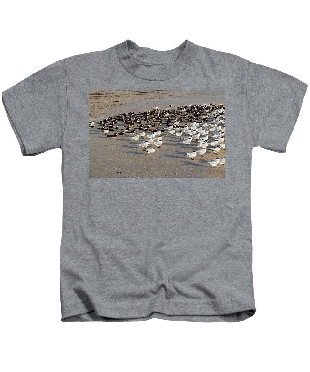 Florida; Bird; Gull; Tern; Royal; Beach; Shore; Coast; Sebastian; Inlet; Sea; Gull; Seagull; Sterna. Kids T-Shirt featuring the photograph Royal Terns At Sebastian Inlet In Florida by Allan Hughes