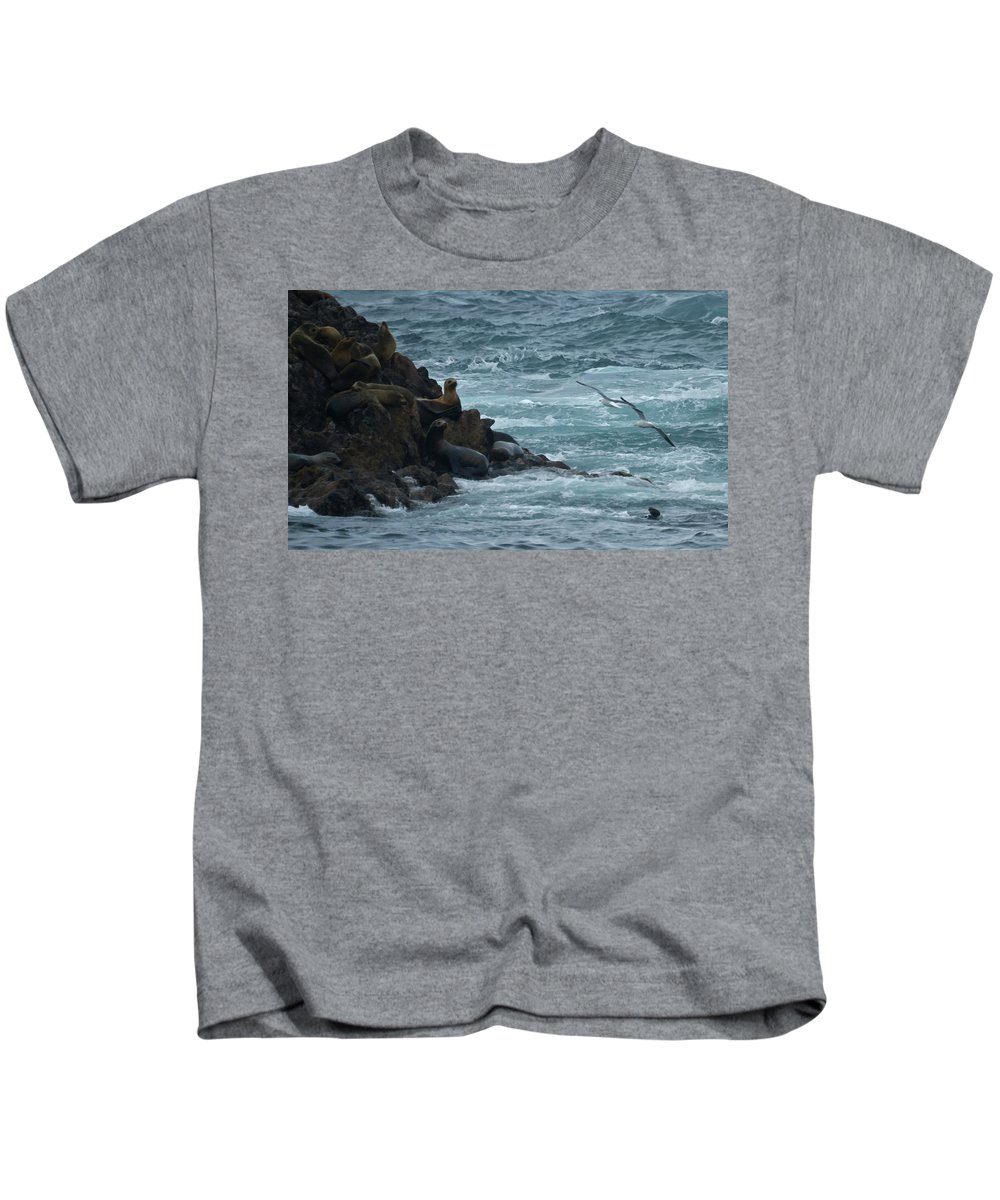 Animals Kids T-Shirt featuring the photograph Seals by Ernie Echols