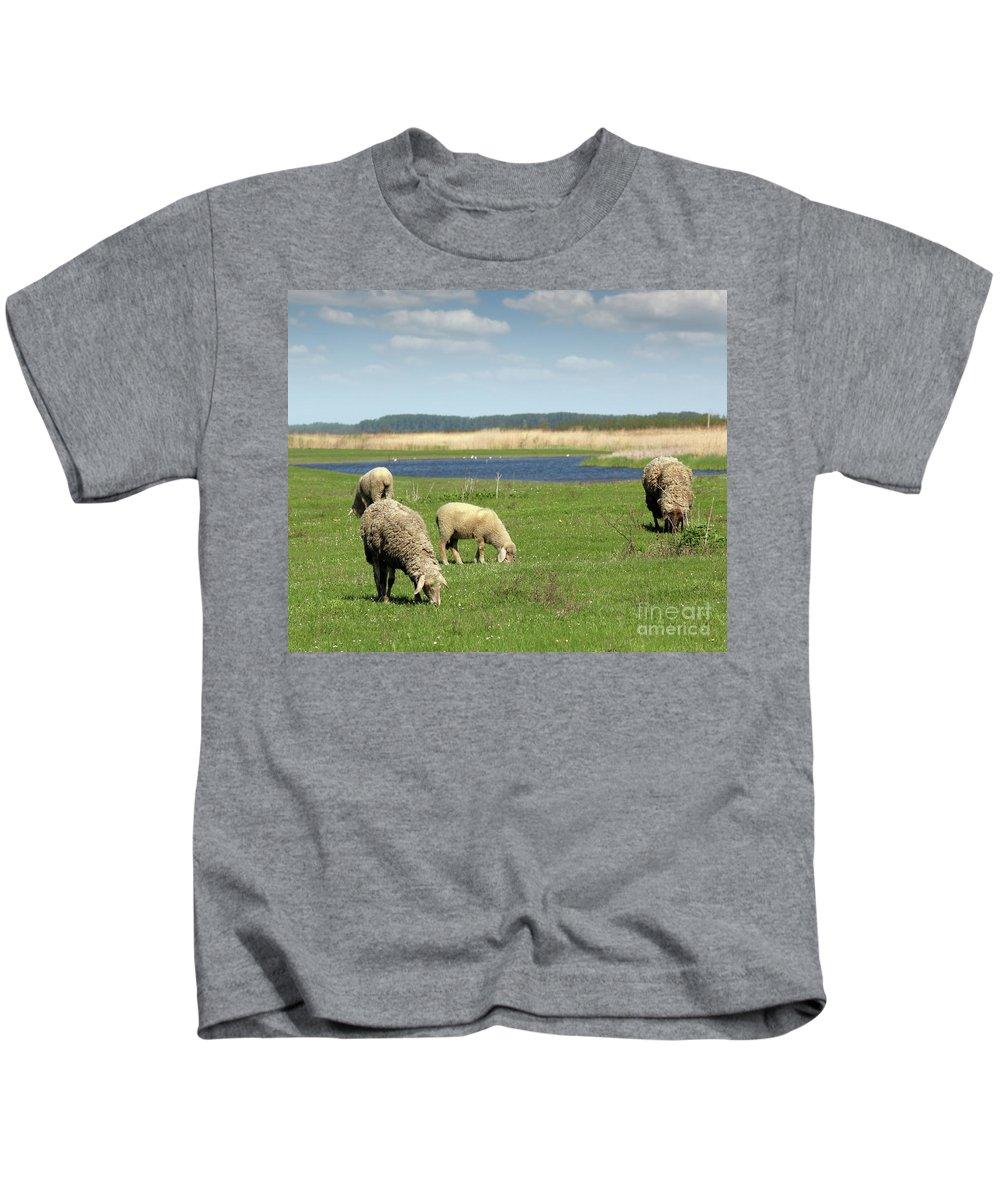Sheep Kids T-Shirt featuring the photograph Sheep On Pasture Nature Farm Scene by Goce Risteski