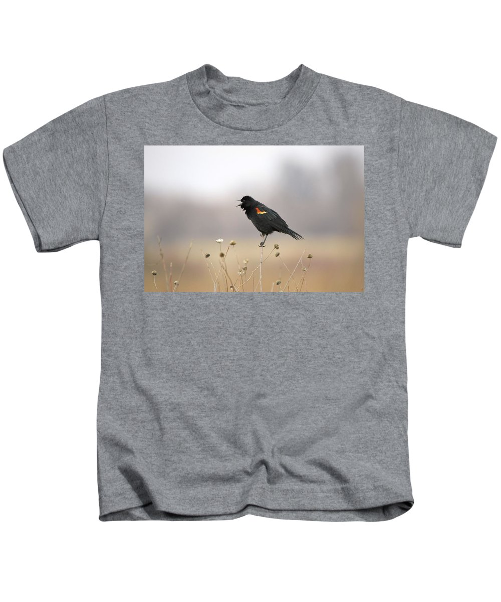 Agelaius Kids T-Shirt featuring the photograph Spring Singer I I by Bonfire Photography