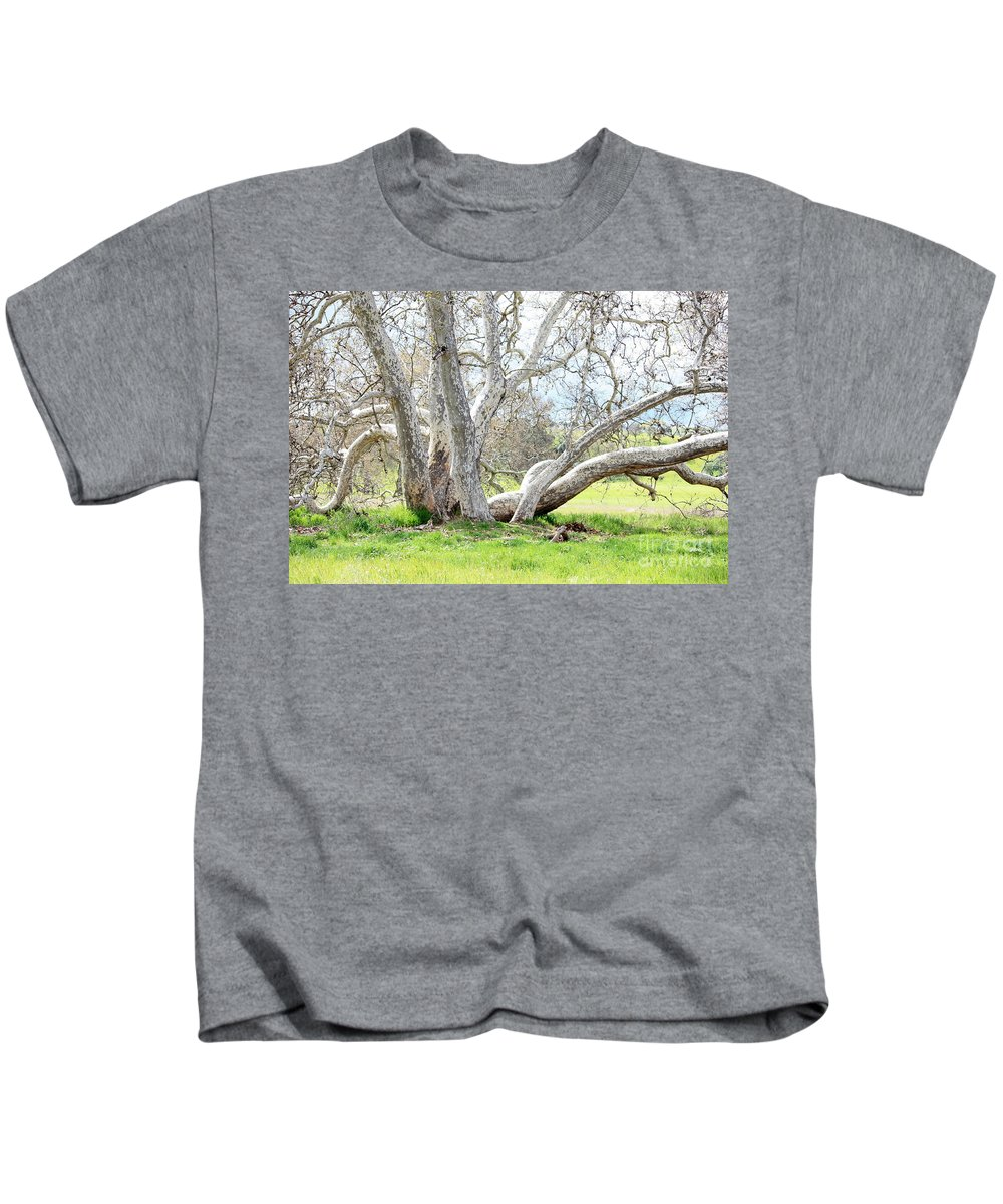 Sycamore Tree Kids T-Shirt featuring the photograph Spring Sycamore Tree by Carol Groenen
