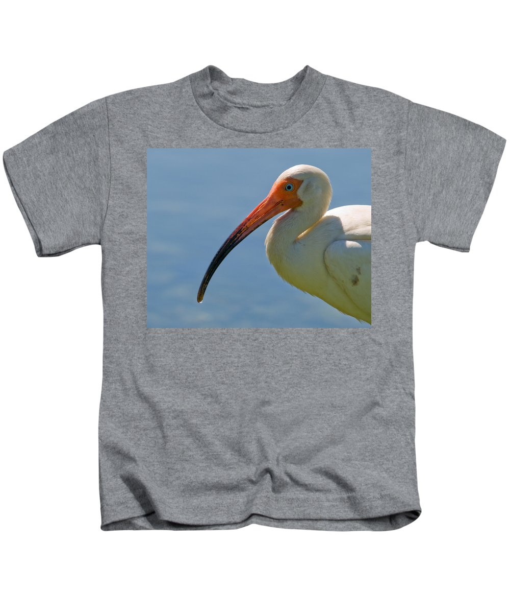 Ibis; White; Bird; Florida; Frog; Pollywogs; Pond; Seabird; Shore; Coast; Water; Fowl; Waterfowl; Fe Kids T-Shirt featuring the photograph White Ibis by Allan Hughes
