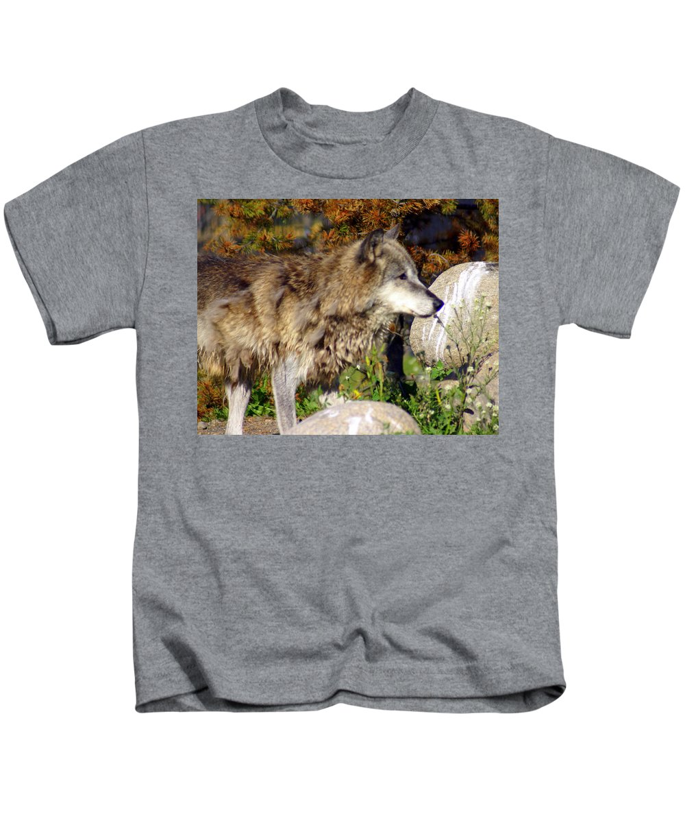 Wolf Kids T-Shirt featuring the photograph Wolf On Patorl by Marty Koch