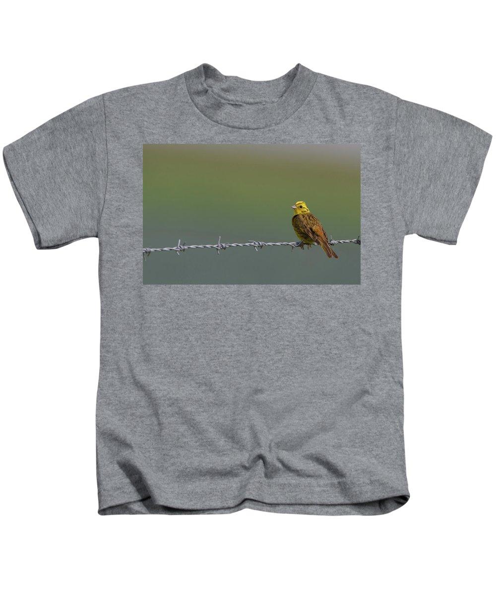 Yellowhammer Kids T-Shirt featuring the photograph Yellowhammer by Peter Walkden