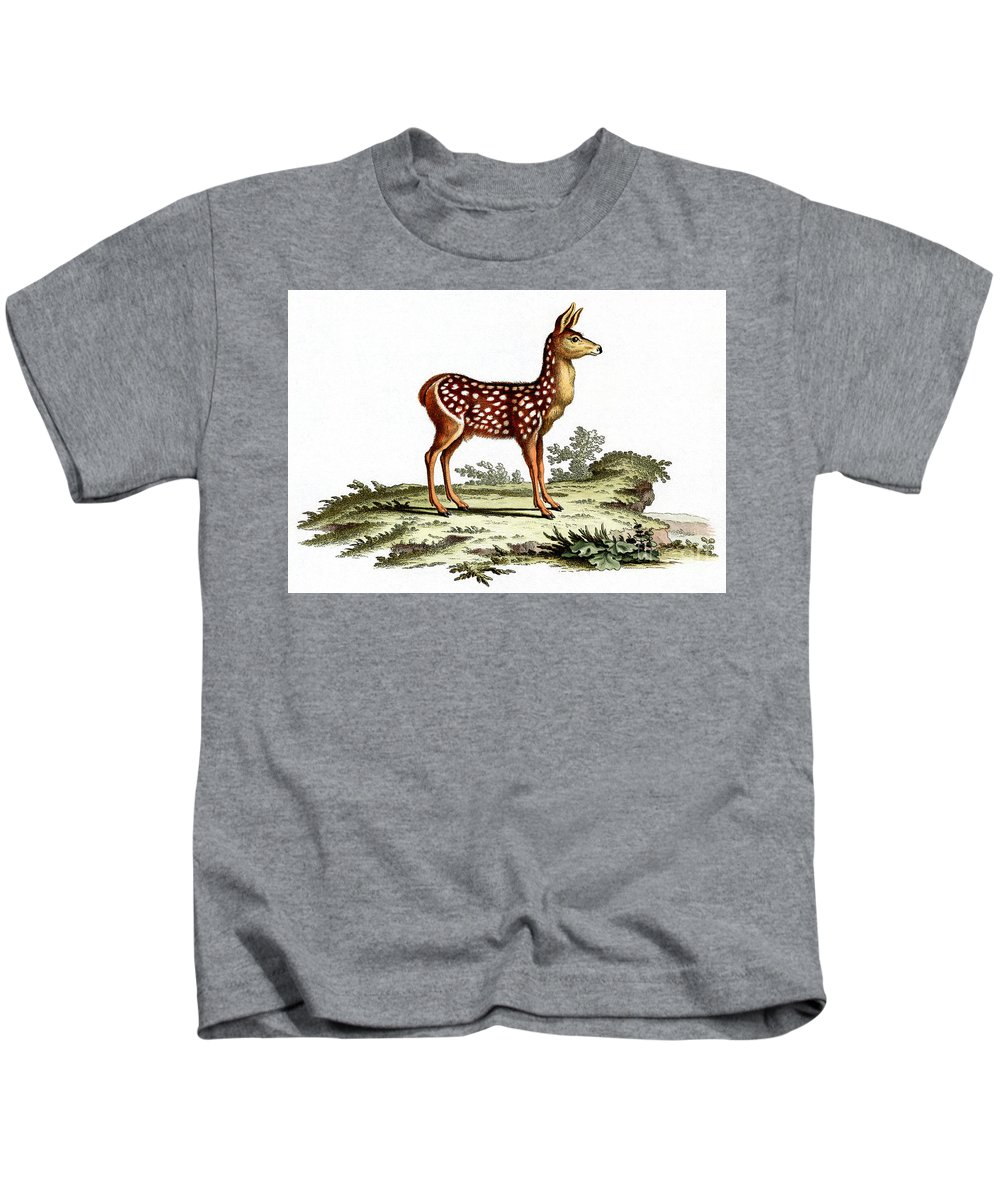Red Deer Fawn Kids T-Shirt featuring the painting Red Deer Fawn by German School
