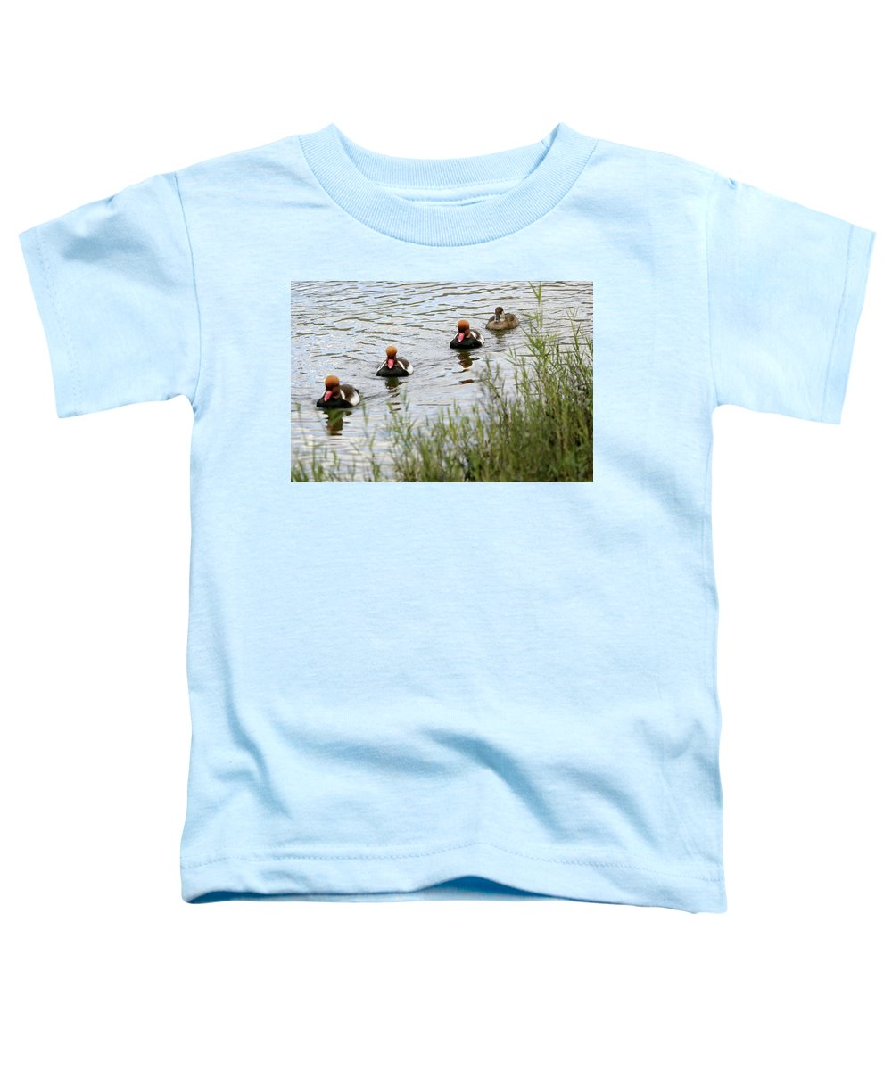 In A Row Toddler T-Shirt featuring the photograph Red-crested Pochard -netta by David Santiago Garcia