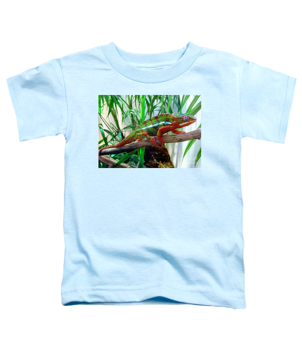 Chameleon Toddler T-Shirt featuring the photograph Colorful Chameleon by Nancy Mueller