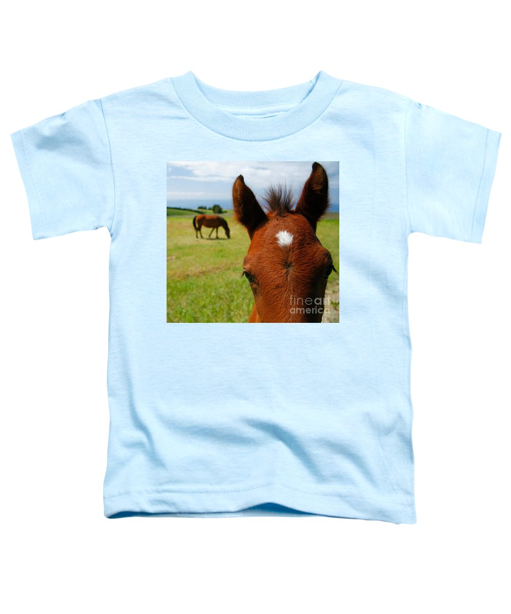 Farm Toddler T-Shirt featuring the photograph Curious Colt by Gaspar Avila