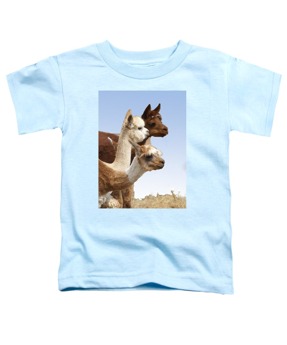 Llama Toddler T-Shirt featuring the photograph Llama's Three by Heather Coen