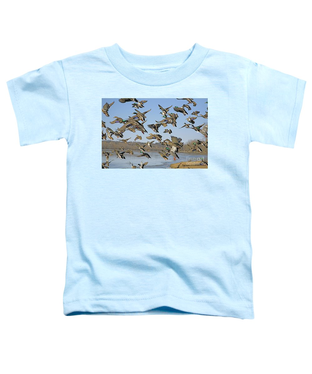 Ducks Toddler T-Shirt featuring the photograph The Mad Rush by Robert Pearson