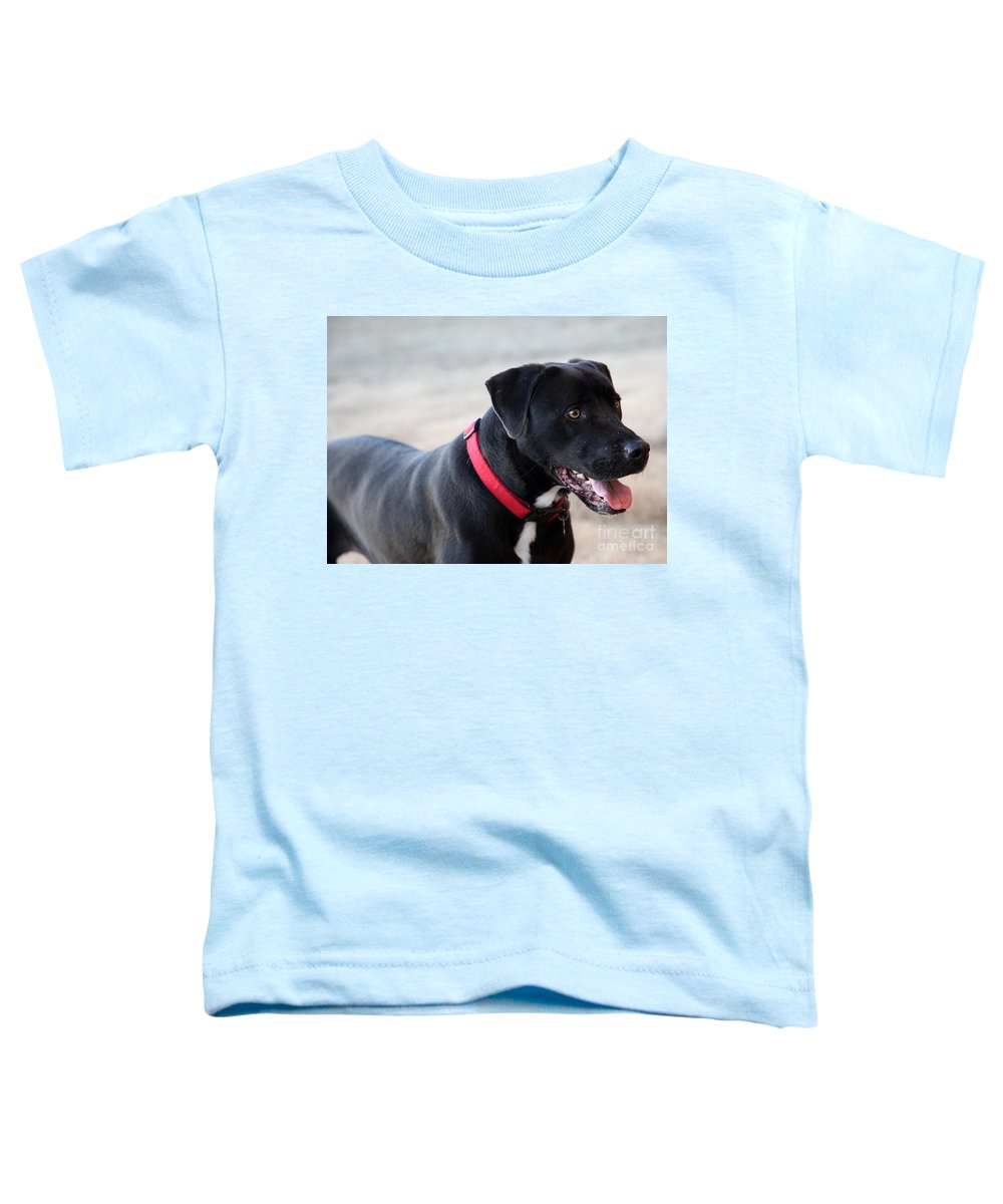 Dogs Toddler T-Shirt featuring the photograph Yes I Want To Play by Amanda Barcon