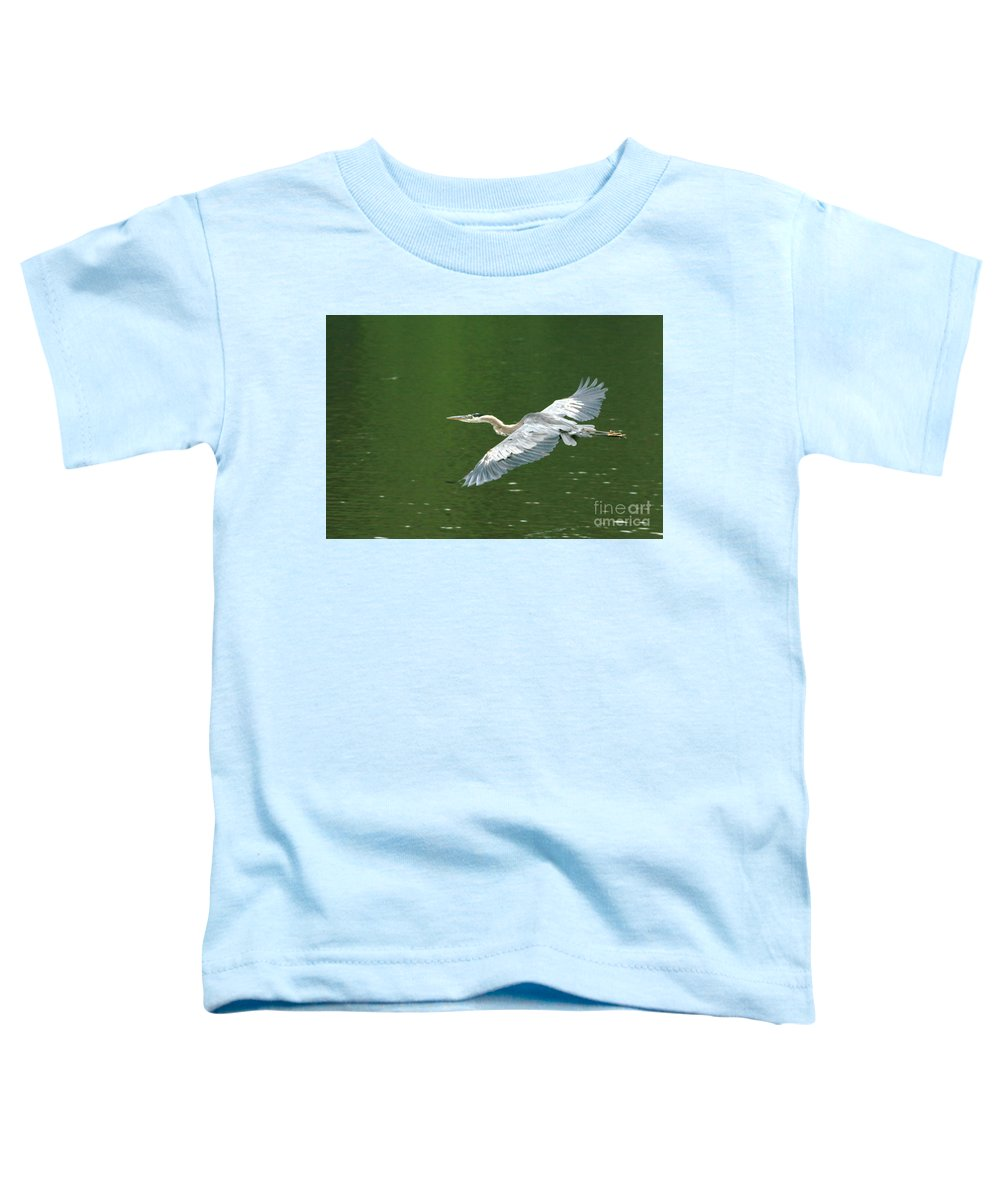 Landscape Nature Wildlife Bird Crane Heron Green Flight Ohio Water Toddler T-Shirt featuring the photograph Young Great Blue Heron Taking Flight by Dawn Downour
