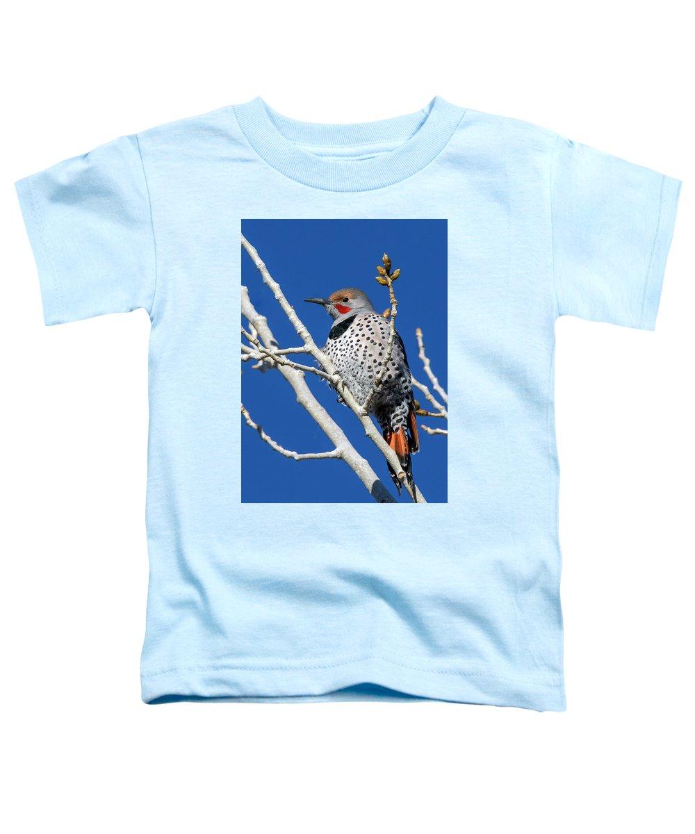 Northern Flicker Woodpecker Toddler T-Shirt featuring the photograph Northern Flicker Woodpecker by Rick Mosher