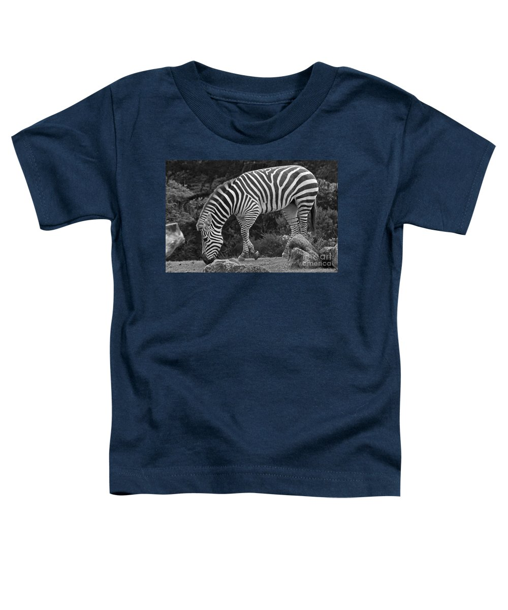 Kate Brown Toddler T-Shirt featuring the photograph Zebra In Black And White by Kate Brown