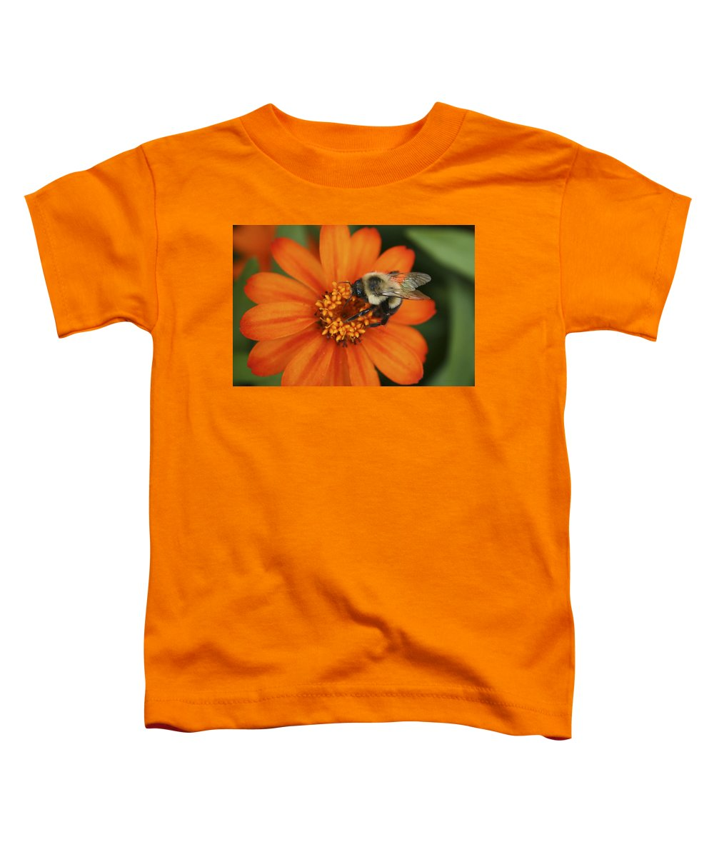 Bee Toddler T-Shirt featuring the photograph Bee On Aster by Margie Wildblood