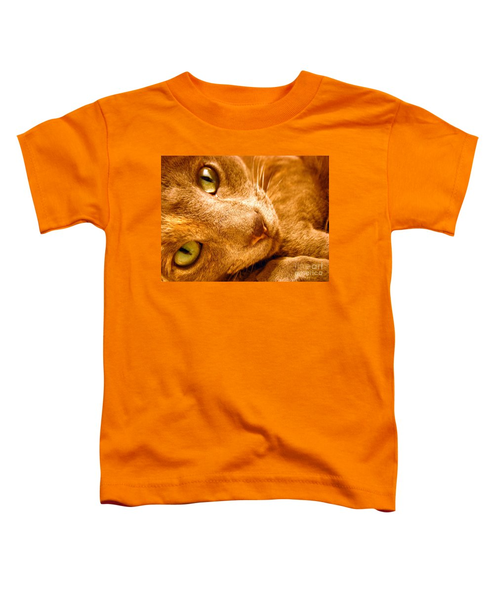 Cats Toddler T-Shirt featuring the photograph Kitty by Amanda Barcon