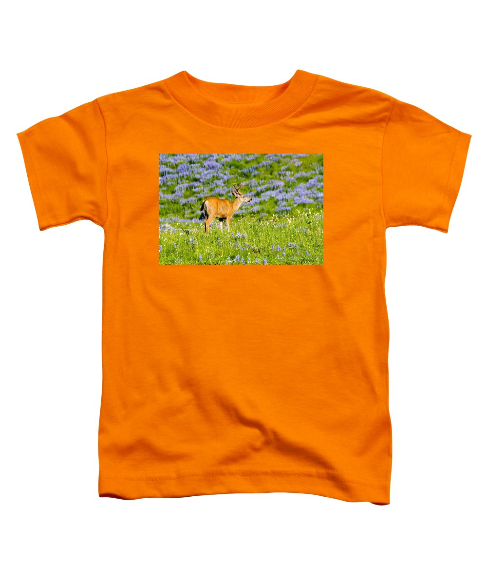Deer Toddler T-Shirt featuring the photograph Velvet On Lupine by Mike Dawson