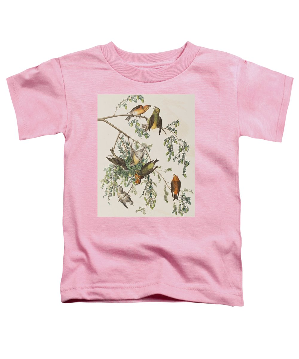 Crossbill Toddler T-Shirts