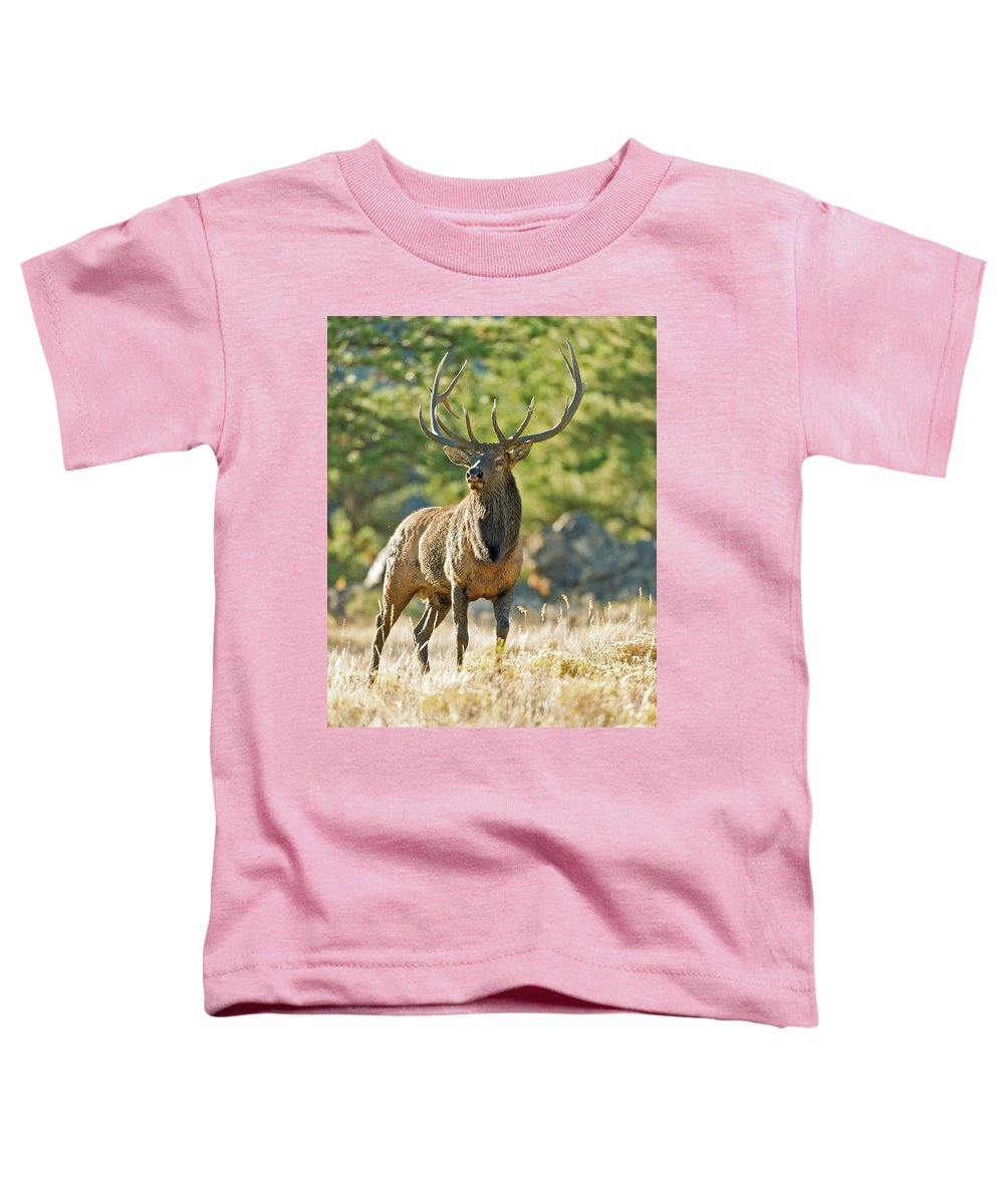 Bull Elk Toddler T-Shirt featuring the photograph A Bull Elk In The Rocky Mountains by Gary Langley