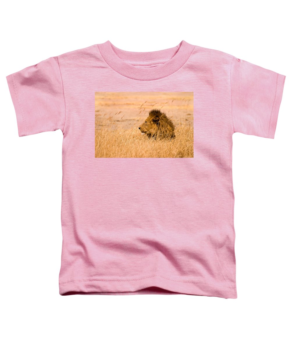 3scape Toddler T-Shirt featuring the photograph King Of The Pride by Adam Romanowicz